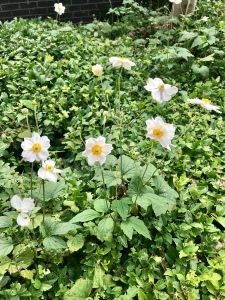 photo of white flowers at the gardens