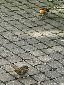 photo of birds at the gardens